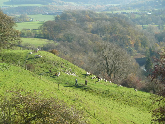 Walkers and sheep - Over Haddon