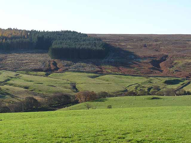 Valley of the Reeding Burn and Whitehill Plantation
