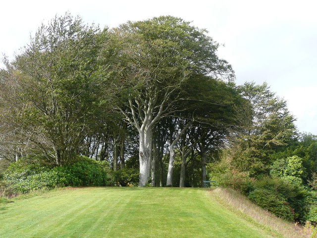 Beech trees, Castle Kennedy