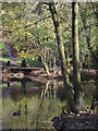 SO8992 : Woodland by Spring Pool in Baggeridge Country Park near Sedgley : Week 44