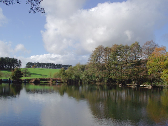 Across Island Pool, Baggeridge Country Park near Wombournee