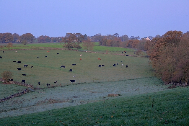 Early Morning Fields near Parkfield