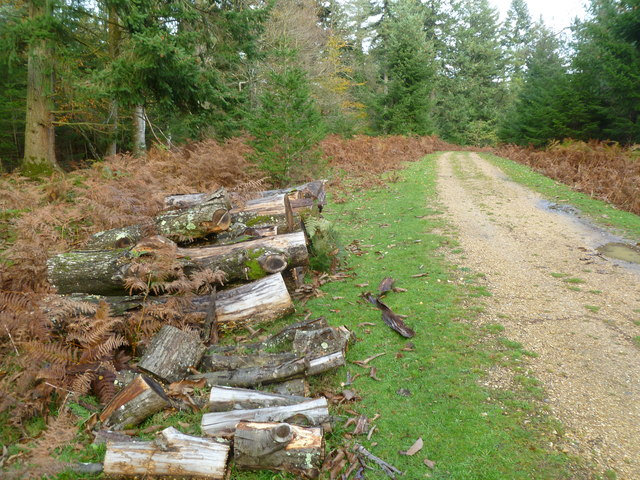 Hursthill Inclosure, timber