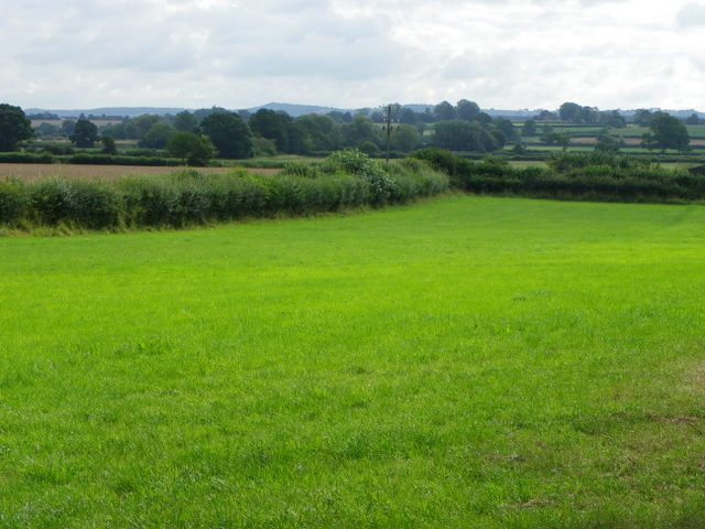 fields and grass - photo #8