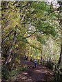SO8992 : Woodland path in Baggeridge Country Park near Sedgley by Roger  Kidd