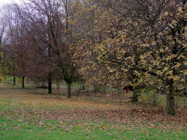 Trees in Muchall Park, Penn, Wolverhampton