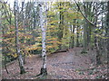 SJ6467 : Mixed birch and beech woodland in Catsclough by Dr Duncan Pepper