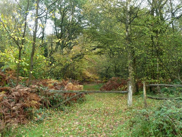 Path, Ranmore Common