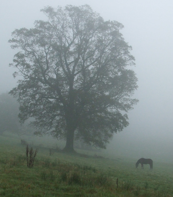 Foggy day at Ardgowan Estate