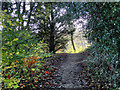 SJ9284 : Path Round Poynton Lake by David Dixon
