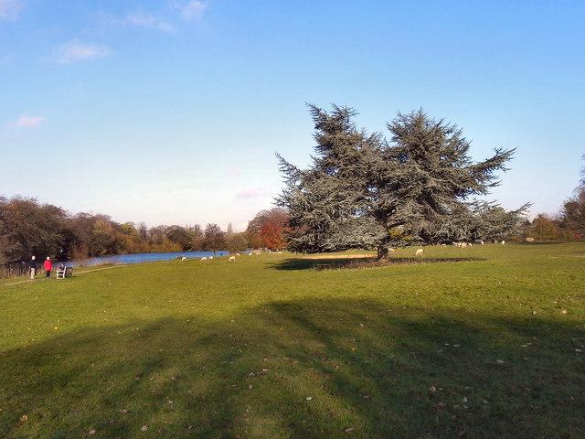 Poynton Park