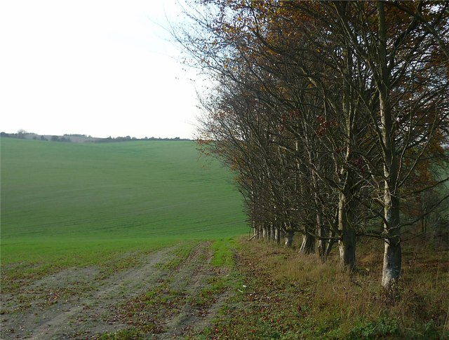 Arable farmland with bank of trees