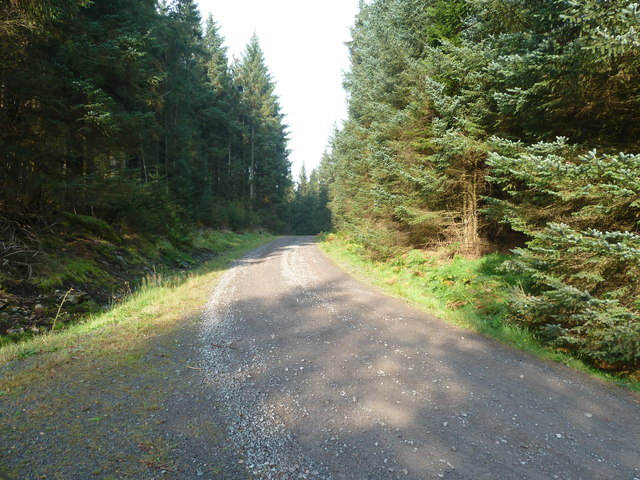 On a forestry road looking southwest
