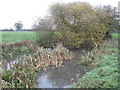 SJ6064 : A boggy pond filled with bullrushes and willow by Dr Duncan Pepper