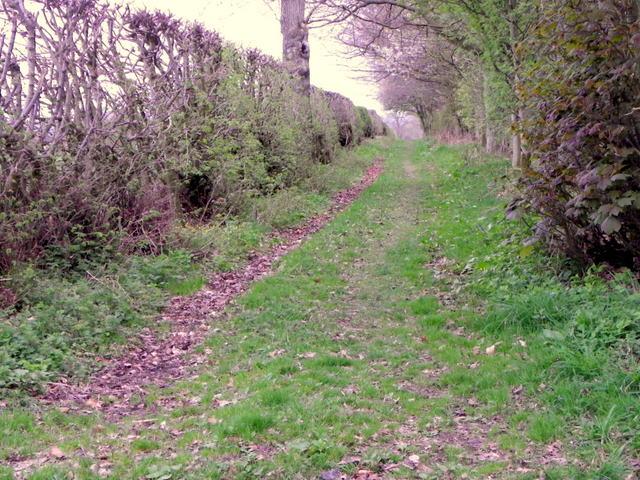 Track near Kinrossie