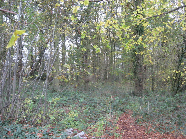 Woodland in Hall Lane