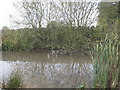 SJ6463 : Field Pond at Grange Farm by Dr Duncan Pepper