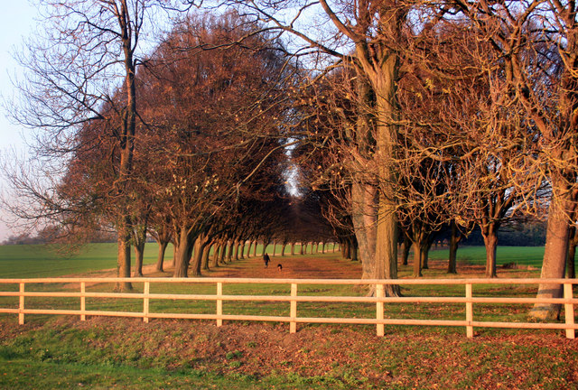 Evening Light near Radley College