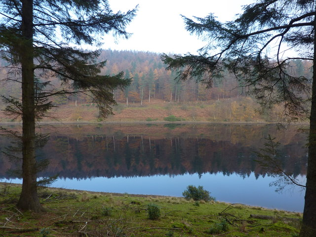 Ridge Wood, reflected