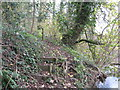 SJ6661 : Footpath in Sandicroft Wood by Dr Duncan Pepper