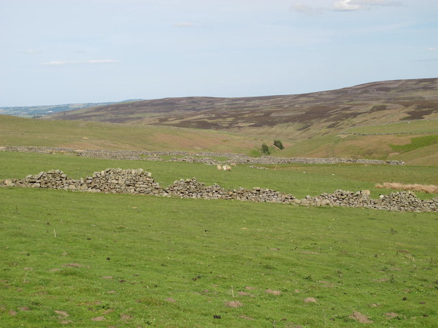 Panorama from Sandyford (6: ENE - Rough pastures below Belmount)