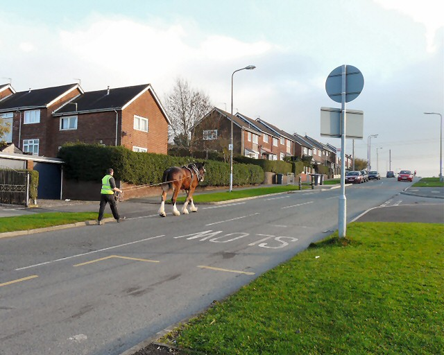 Heavy Horse on Hattersley