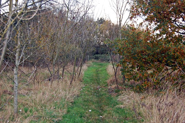 Footpath through a spinney, Packards Grove