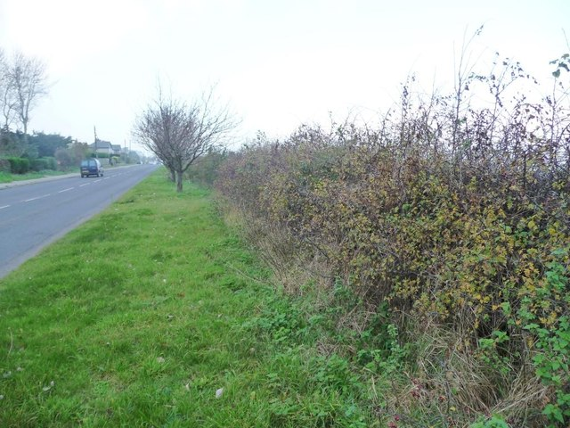 Autumn hedge along the A1039