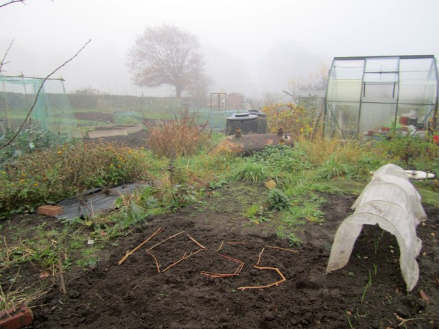 Craggwood Allotments in fog, 20 November 2011
