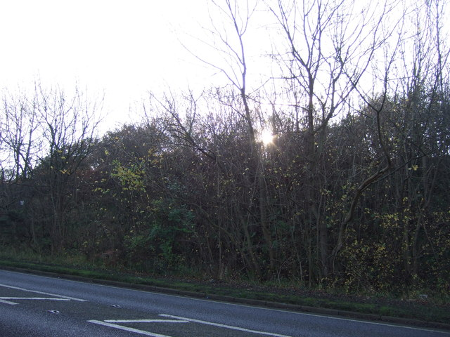 Woodland beside the A1086