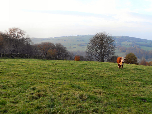View from Boarfold Lane (1)