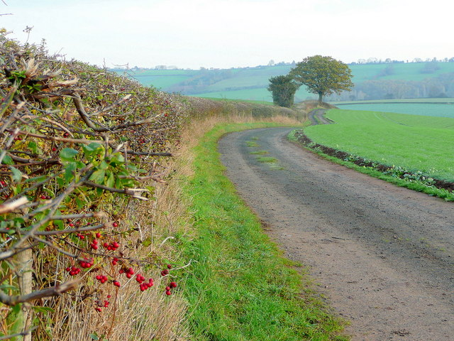 Farm track; late autumn