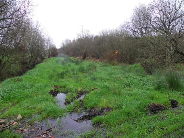 Overgrown lane, Ballyscullion
