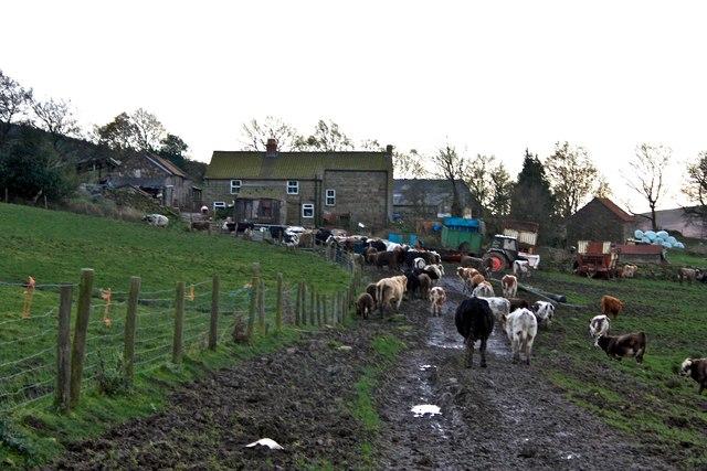 Rural Gridlock, Heygate Farm, Rosedale