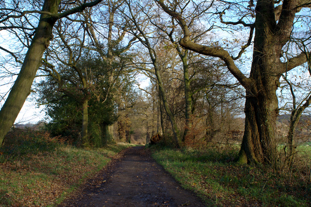 Hollybank Lane