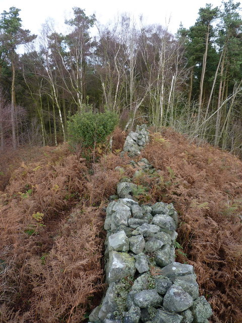 The end of the wall in Lodgehill Coppice