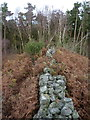SO5299 : The end of the wall in Lodgehill Coppice by Richard Law