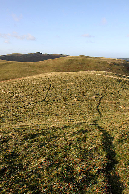 Sheep tracks on Shoulder Hill