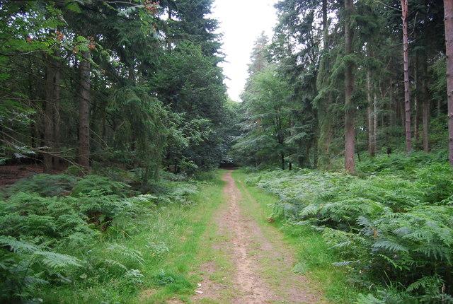 Sussex Border Path, Rake Hanger