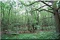 SU7926 : Woodland, Rake Hanger by N Chadwick