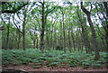 SU7926 : Woodland at the foot of Rake Hanger by N Chadwick