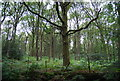 SU7927 : Deciduous woodland, Rake Hanger by N Chadwick