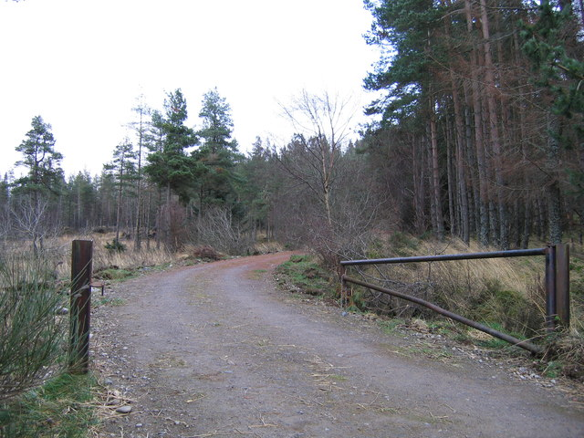 Forest track into Battan