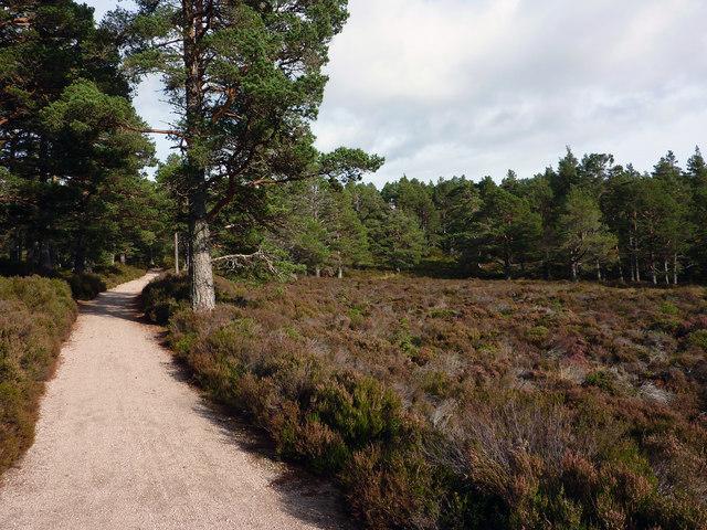 Path near Aultdrue, Rothiemuchus