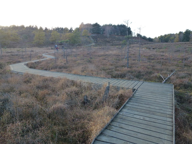 Boardwalk on Dersingham Bog, Norfolk