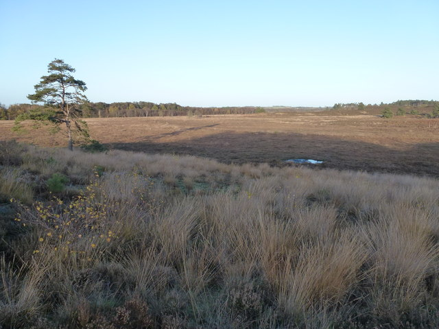 Dersingham Bog (National Nature Reserve)
