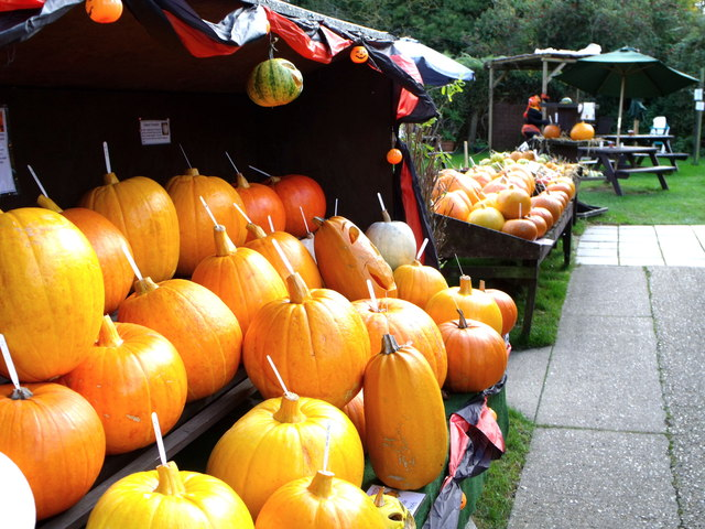 Pumpkins at Arlington Tea Rooms