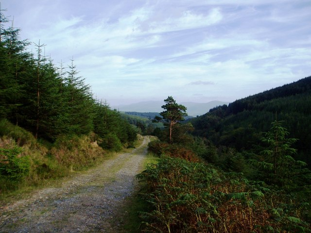 Track in Glengarra Woods, Galty Mountains