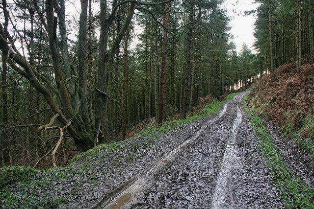 Clain Wood