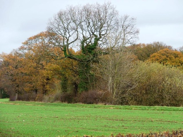 Autumnal woodland near Yew Tree Farm